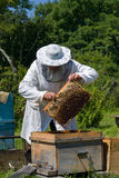 Beekeeper 42 Royalty Free Stock Photo