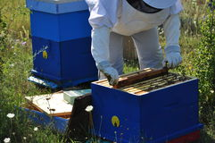 beekeeper Fotografia Stock