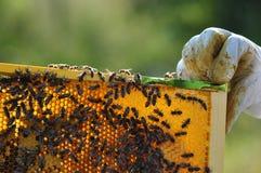 beekeeper Immagini Stock Libere da Diritti
