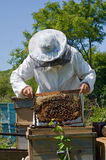 Beekeeper 50 Royalty Free Stock Images