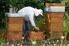 beekeeper Arkivfoton