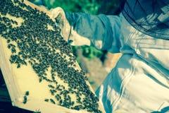 beekeeper Stockfoto