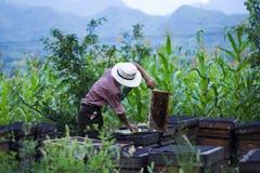 beekeeper royaltyfri bild