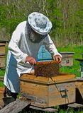 Beekeeper 6. A beekeeper in veil at apiary among hives. Summer, sunny day. Russian Far East, Primorye Stock Image