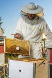 beekeeper Immagine Stock