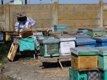 beekeeper video estoque