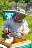 Beekeeper in action Stock Images