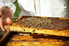 Beekeeper in an apiary Royalty Free Stock Photo