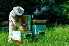 Beekeeper on apiary. Beekeeper is working with bees and beehives on the apiary. Apiculture concept stock photos