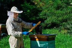Beekeeper on apiary. Beekeeper is working with bees and beehives on the apiary. Apiculture concept stock images
