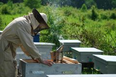 Beekeeper on apiary. Beekeeper is working with bees and beehives on the apiary. royalty free stock photography