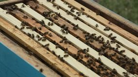 A beekeeper at apiary among hives stock video