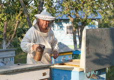 Beekeeper on apiary.  pulling frame from the hive Stock Image