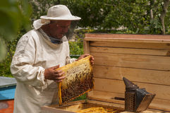 Beekeeper on apiary. pulling frame from the hive Stock Images