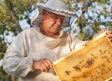 Beekeeper on apiary. pulling frame from the hive Royalty Free Stock Images