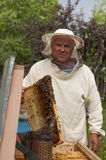 Beekeeper on apiary. pulling frame from the hive Royalty Free Stock Image