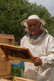 Beekeeper on apiary. pulling frame from the hive Royalty Free Stock Photo