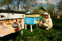 Beekeeper on apiary Royalty Free Stock Image