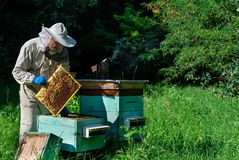 Beekeeper on apiary. Beekeeper is working with bees and beehives on the apiary. Apiculture concept royalty free stock photos