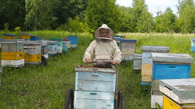 The Beekeeper in australian, canadian, european white suit works on an apiary in a forest, on a clearing. Pushes the stock video footage