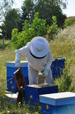 Beekeeper. Beautiful beehive and bee located in the forest Stock Photos
