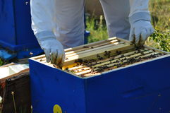 Beekeeper. Beautiful beehive and bee located in the forest stock photo