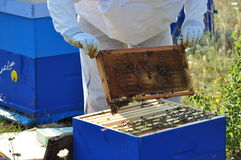 Beekeeper. Beautiful beehive and bee located in the forest royalty free stock photos