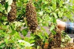 Beekeeper Stock Photography