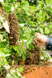 Beekeeper Royalty Free Stock Photo