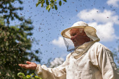 Beekeeper and bee swarm, apiary beehive honey Royalty Free Stock Photo