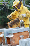 Beekeeper and beehives Stock Image