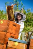 Beekeeper and beehives royalty free stock photography