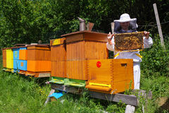 Beekeeper and beehives royalty free stock images