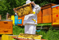 Beekeeper and beehives. Beekeeper in white worksuite near beehives with bees stock images