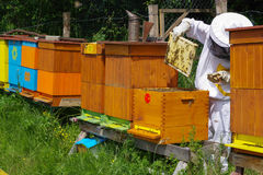 Beekeeper and beehives royalty free stock image