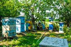 Beekeeper and bees in the apiary. Beekeeper and bees in the apiary stock photos