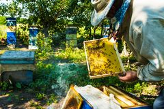 Beekeeper at the apiary. Beekeeper and bees in the apiary stock image