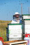 Beekeeper and Bees Royalty Free Stock Photo