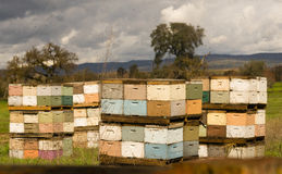 Beekeeper Boxes Bee Colony Farm Field Royalty Free Stock Photos