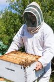 Beekeeper Carrying Honeycomb Frames In Crate. Young male beekeeper in protective workwear carrying honeycomb frames in crate at apiary Stock Photos