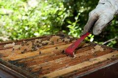 A beekeeper checkes his hives Stock Photos
