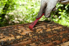 A beekeeper checkes his hives Stock Images