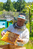 Beekeeper checking a beehive Royalty Free Stock Photography