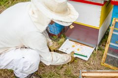 Beekeeper is checking collected colorful bee pollen on white plastic casserole. Apiarist, beekeeper open`s plastic casserole for collecting colorful fresh bee royalty free stock photography