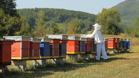 Beekeeper checking frames stock footage