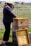 Beekeeper. A beekeeper checking her hive royalty free stock photos