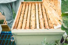 Beekeeper checking his bees. In beehouse Royalty Free Stock Photo