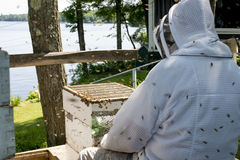 Beekeeper checking on his hive royalty free stock image