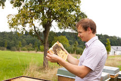 Beekeeper checking a honeycomb stock photo