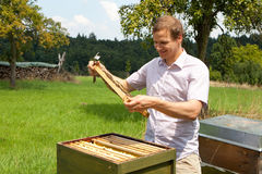 Beekeeper checking a honeycomb Stock Images